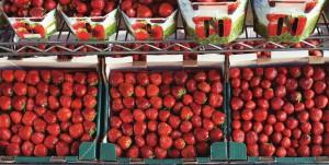 2014-09-10-Life-of-Pix-free-stock-photos-strawberry-market-fruit